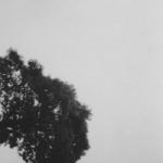 treeandwater