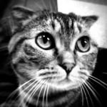 mikipedia_mono